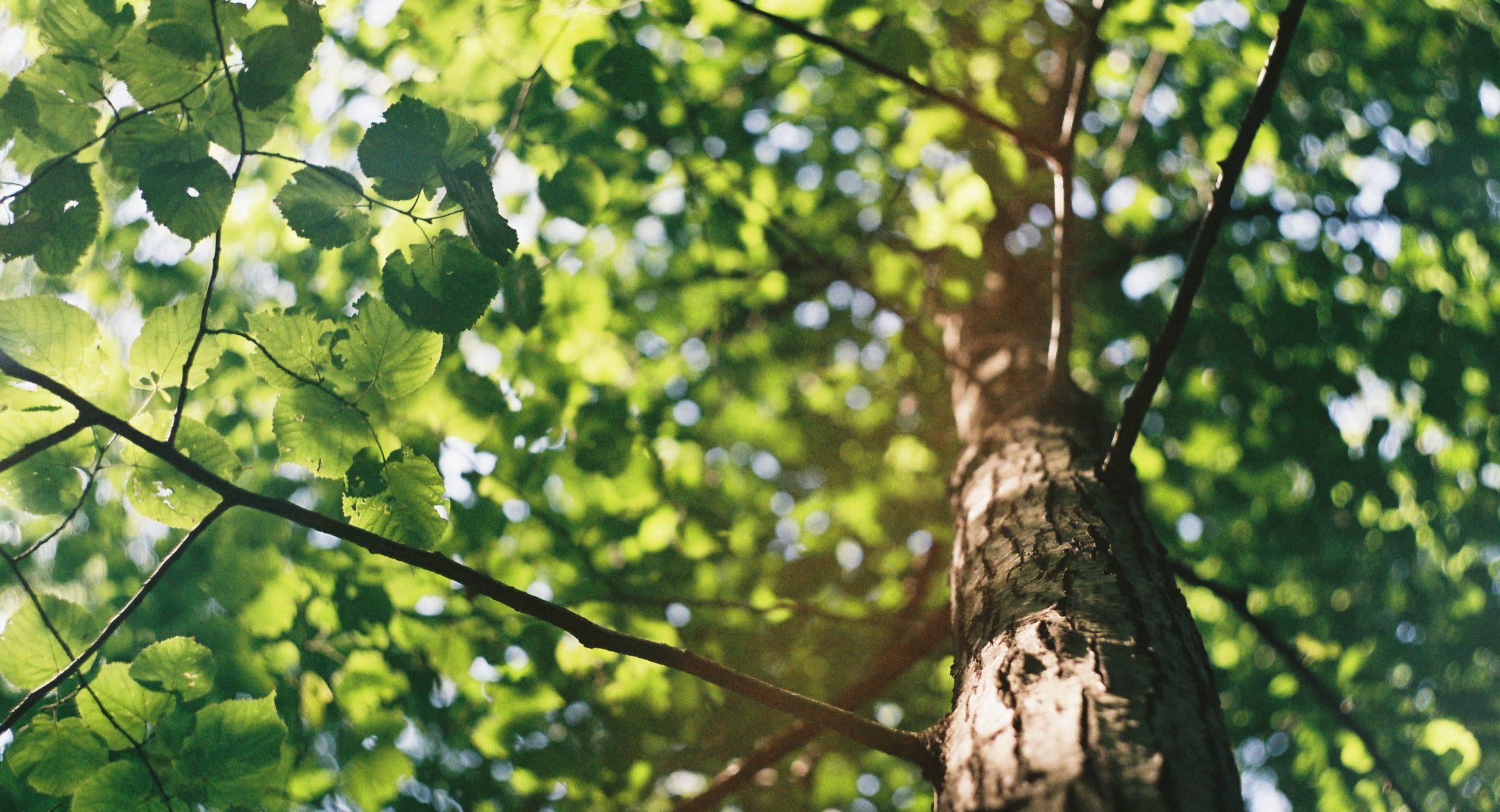 TreeTraque
